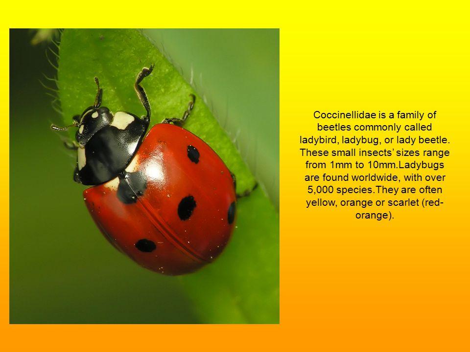 Ladybugs Ppt Video Online Download