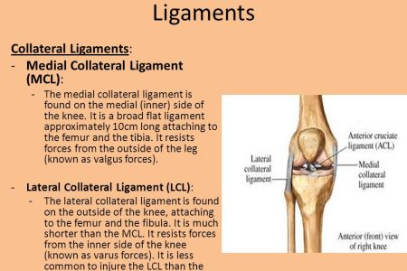 Lateral Collateral Ligament Physical Therapy ✓ Labzada T Shirt