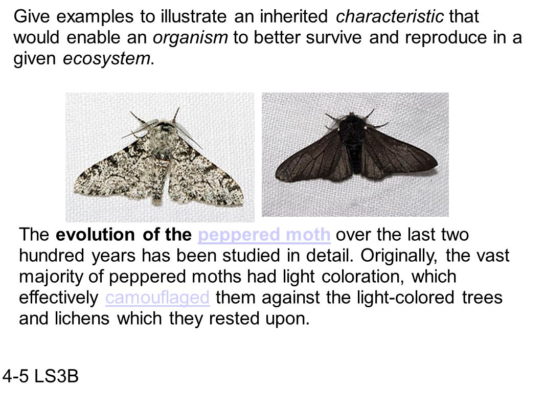Peppered Moth Evolution Worksheet