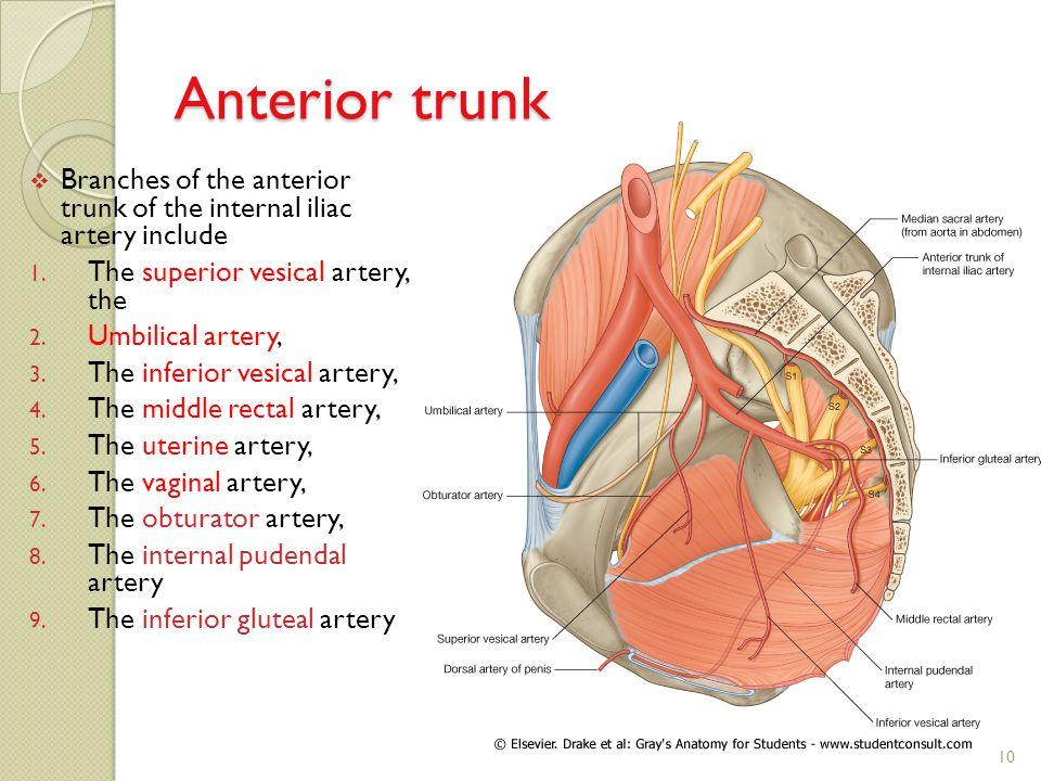 Visceral Artery Anatomy