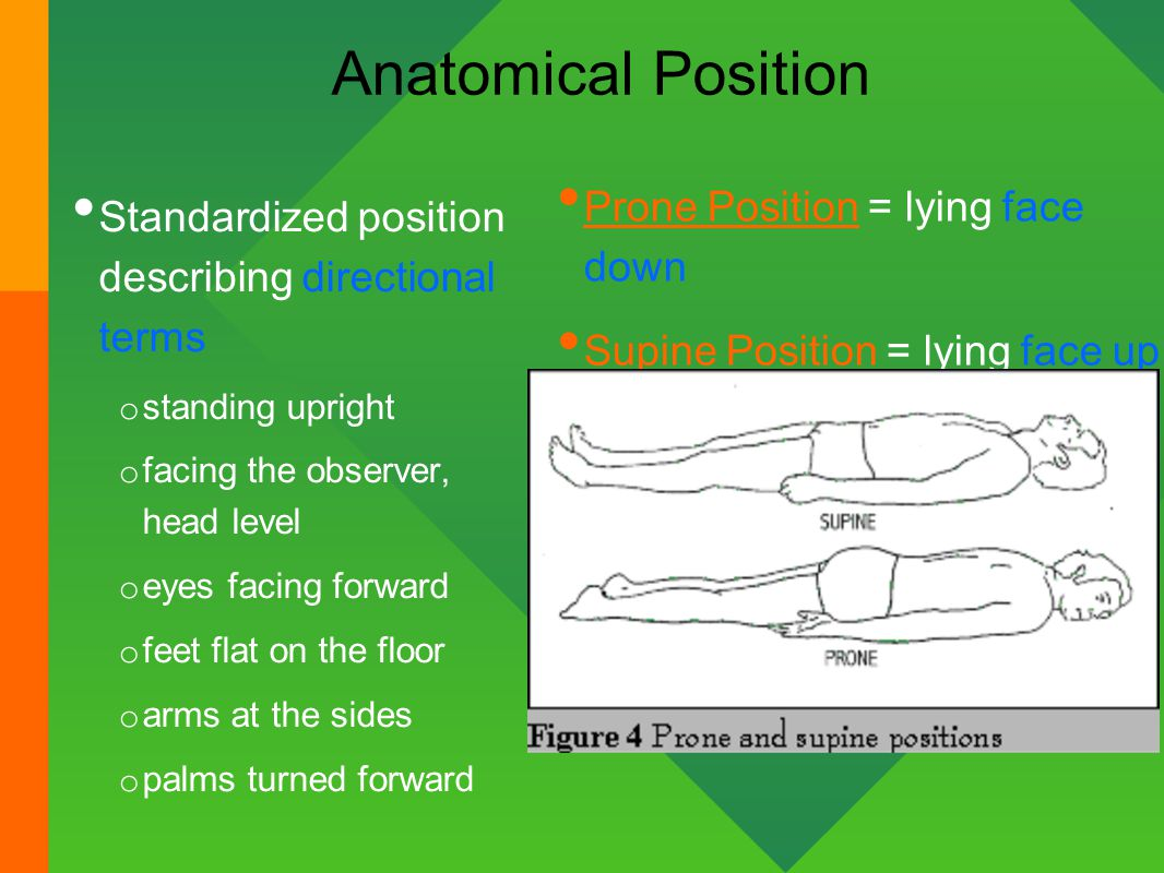 Anatomical Planes Worksheet