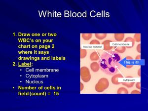 Lab #15 Blood What are the parts of the blood?  ppt video