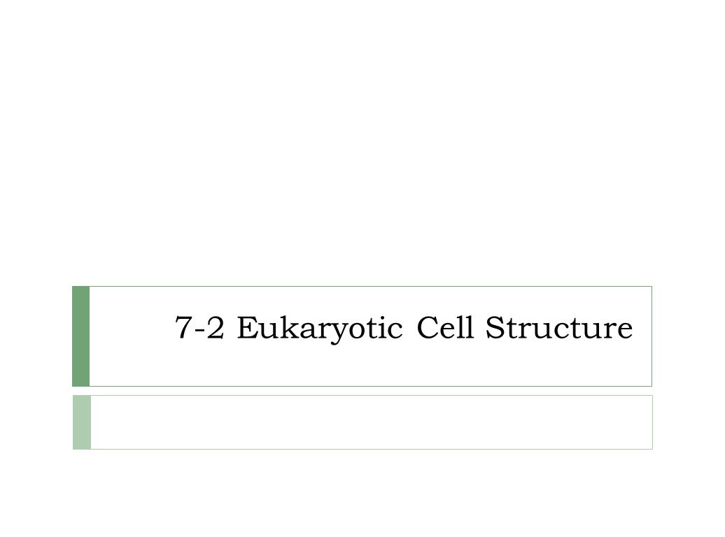 7 2 Eukaryotic Cell Structure