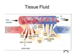 Tissue Fluid  ppt video online download