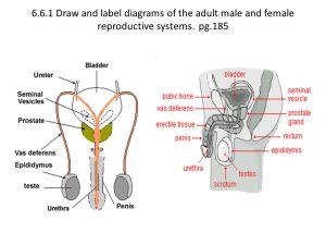 Topic 66 IB Biology 2 Van Roekel  ppt video online download