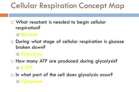 Concept Map Cellular Respiration Answers 4k Pictures 4k Pictures