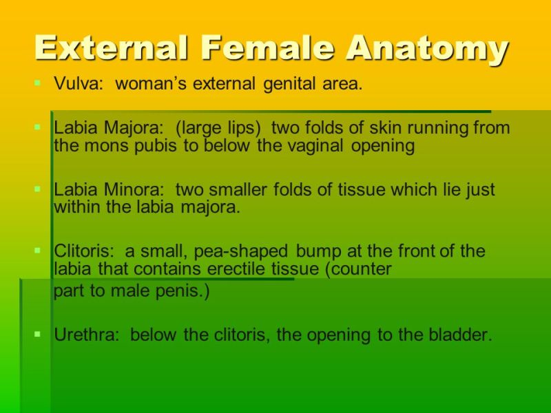 external female genital anatomy » Path Decorations Pictures | Full ...