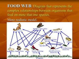 Standard B Illustrate the flow of energy through ecosystems (including food chains, food webs