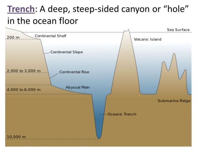 Ocean Floor Diagram Worksheet Answers Wikizie