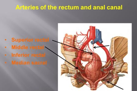 Interior Inferior Rectal Vein Swelling Full Hd Maps Locations