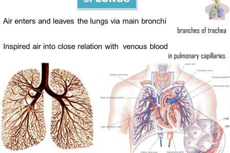 Interior Inferior Aspect Of The Lung Free Interior Design Mir Detok