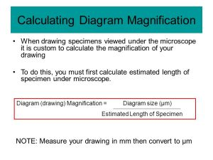 Parts of a Light Microscope  ppt video online download