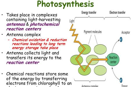 Photosynthesis reaction hd images wallpaper for downloads easy website picture how photosynthesis works hubpages the basic process of photosynthesis is depicted in the diagram photosynthesis chemical reaction layers ccuart Gallery