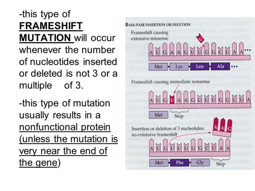 Frameshift Mutations Result From | Nakanak.org