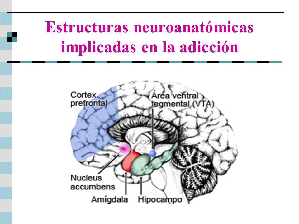 Resultado de imagen de nucleus accumbens adiccion