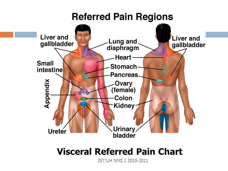 Left Side Abdominal Diagram