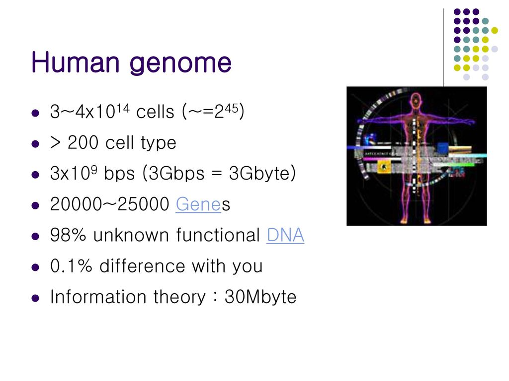 Human Genome Project And Computer Science