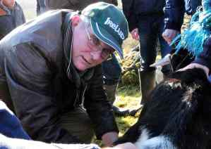 Milking the Imbolc Goat