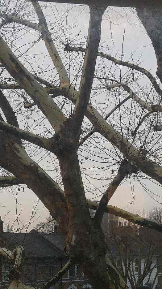 Grey January skies