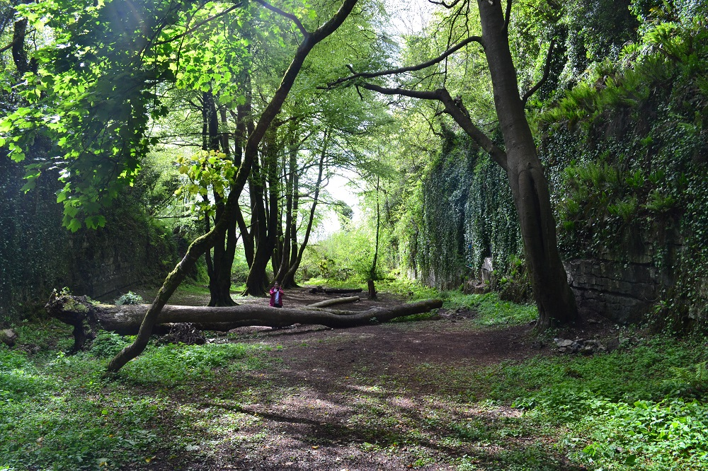 Enchanting Glen in Sligo