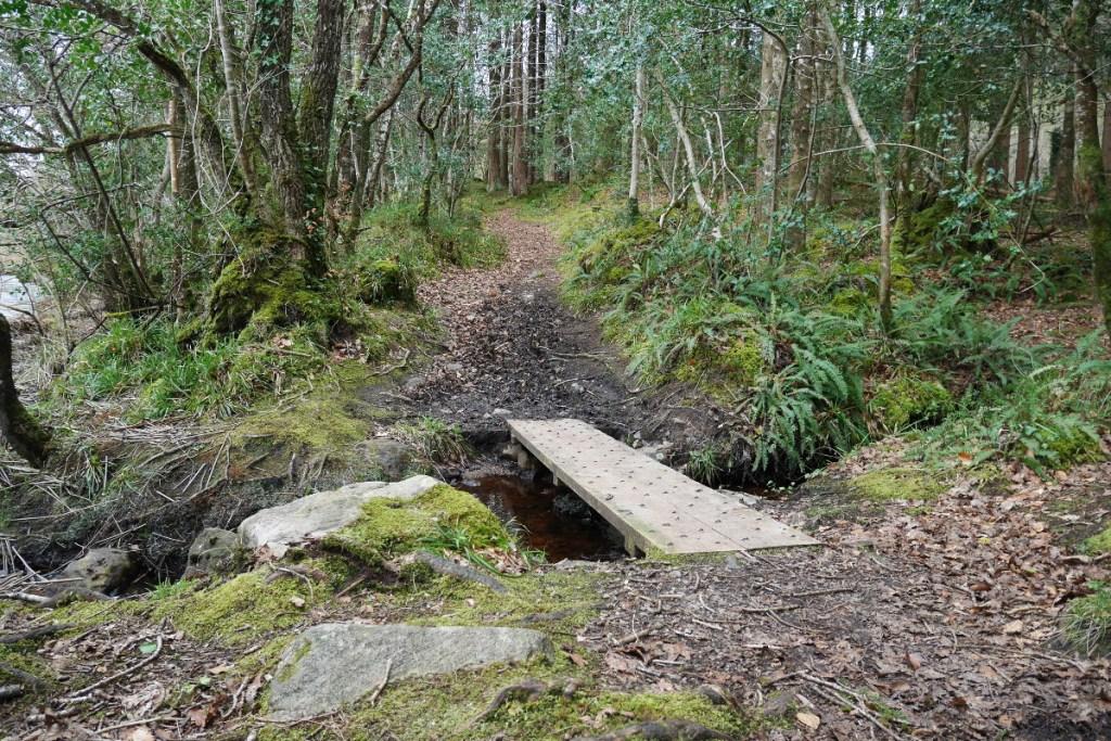 Dooney Rock