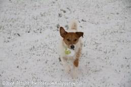 Bert's ball turned into a snowball
