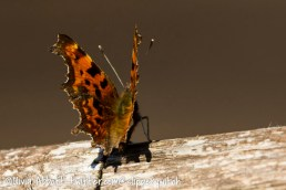 Another comma