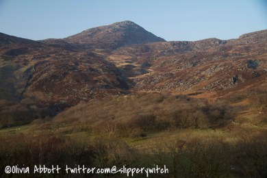 Afternoon sun bathes the hillside