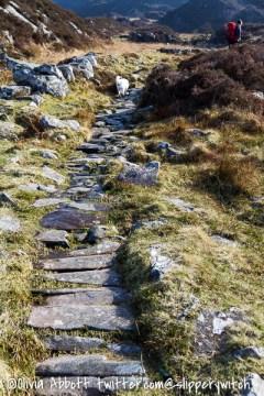 Bertie heads up the path