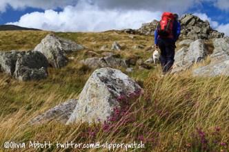 Heading towards the summit of Pen yr Helgu Ddu