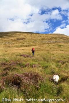Graham and Bert bashing through the heather