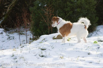 snowy day2-3