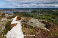 conwy mountain-14