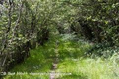 prysor railway walk-12