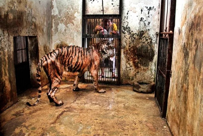 This Place Is Called The 'Zoo Of Death'. And It Needs To Be Shut Down NOW.
