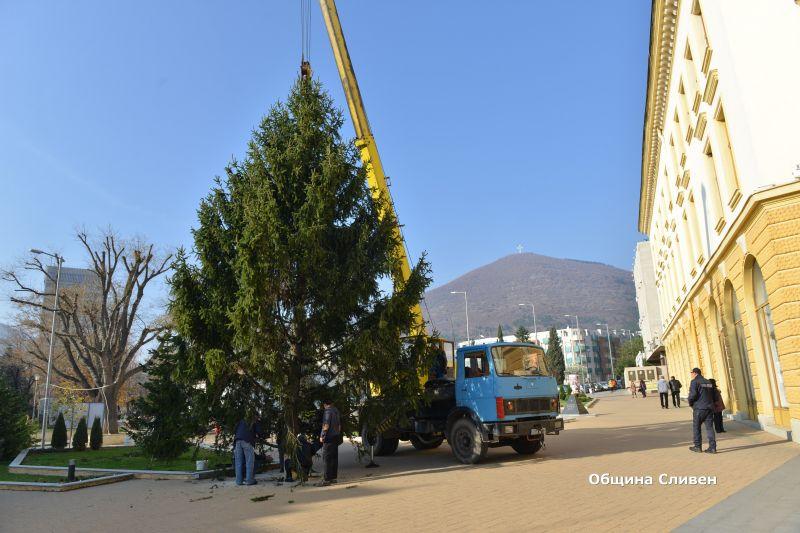 Монтираха коледната елха в Сливен