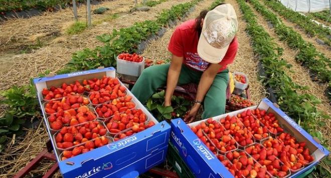 Сезонна работа в селското стопанство в Испания, Ел Росио