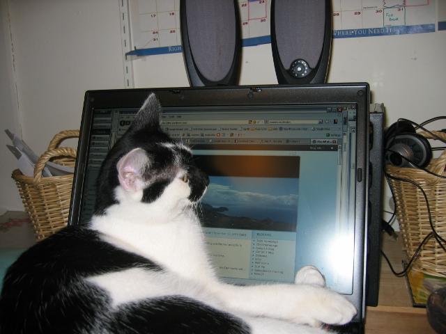 Elsie reading the blog