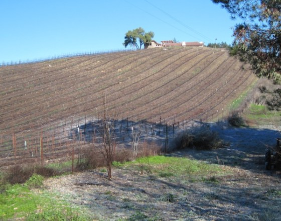 Some hail or frost remains on the ground across the fence at the Croad vineyard.