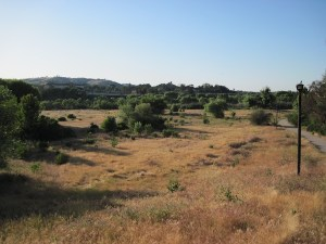 Lawrence Moore Parks' grass is dying for lack of rain in May, Paso Robles