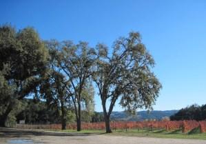 Oaks by Vineyard on Oak View Rd, November 18, 2011