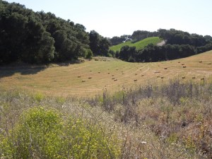 Baled Hay on Highway 46 West, Templeton