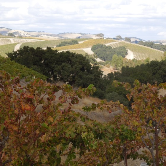 Foreground are the vines of Rotta Vineyard on October 22, 2012.