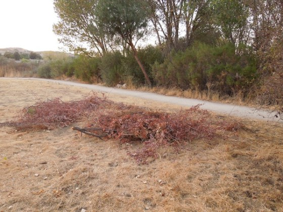 Pile of Dry Brush on Dry Grasses at Larry Moore Park