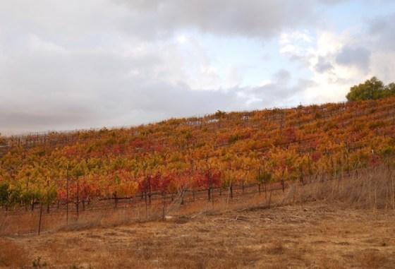 Croad Vineyard in November