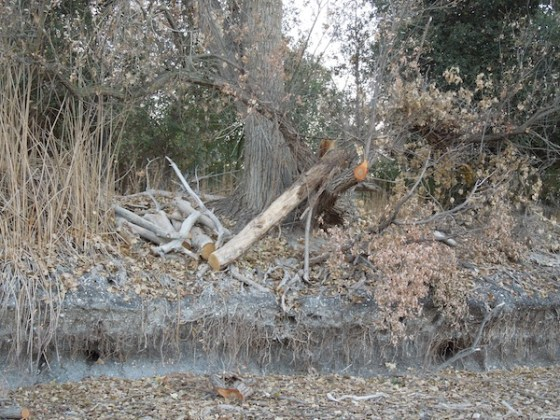The Edge of the Island in Atascadero Lake, December, 2013
