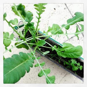 Gardening activities for kids: mini vegetable garden.