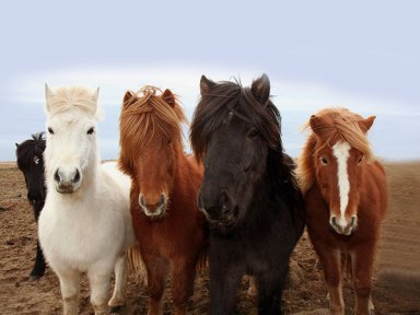 Quartet Of Colts