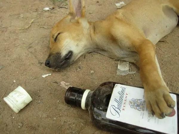 Sozzled Puppy
