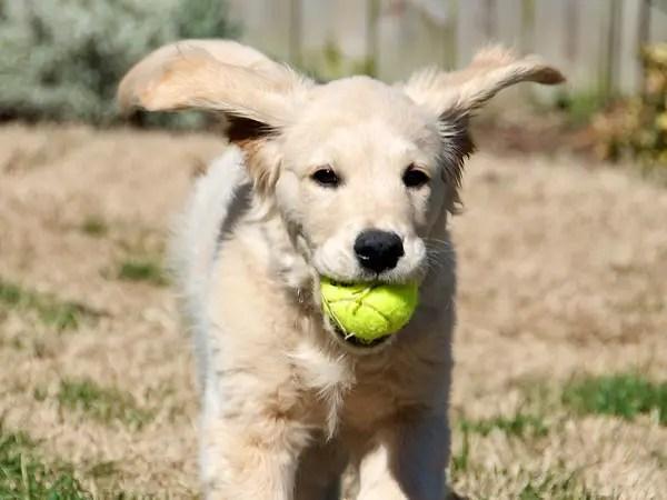 No, I Won't Give The Ball